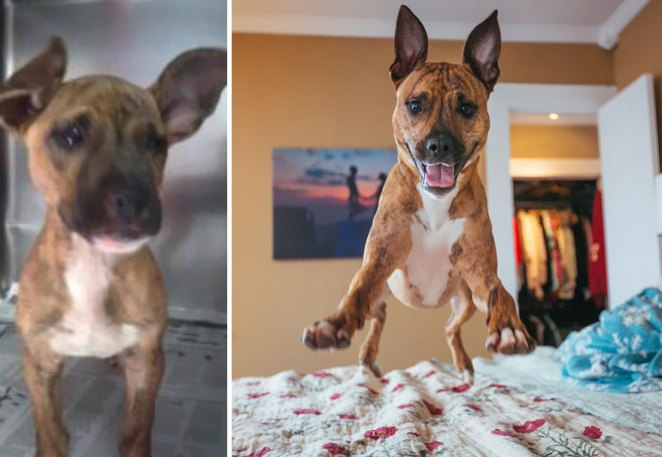 Hank! Abuse Left This Poor Pup With Scars And Timidness, But Now He Smiles Ear-To-Ear