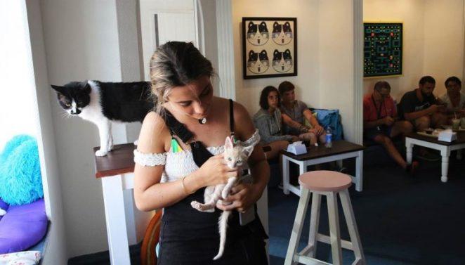 Resultado de imagen para cat cafe uruguay art cat cafe