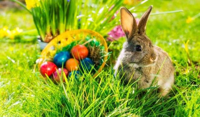 Resultado de imagen para easter bunny