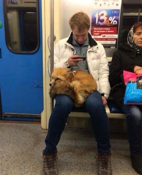 Just A Fox In A Subway