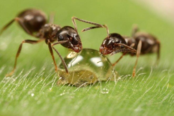 Resultado de imagen para uñas con hormigas