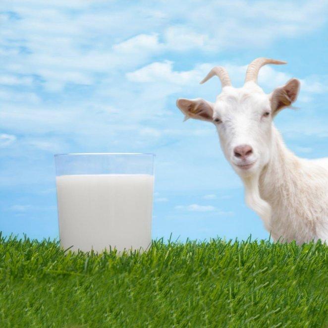 Resultado de imagen para goat milk