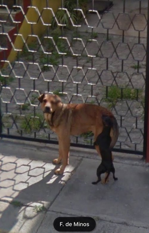 Perritos De Google Maps