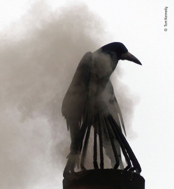 """Smoke Bath"" By Tom Kennedy, Ireland, Highly Commended 2018 Urban Wildlife"