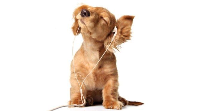 Resultado de imagen para music dog