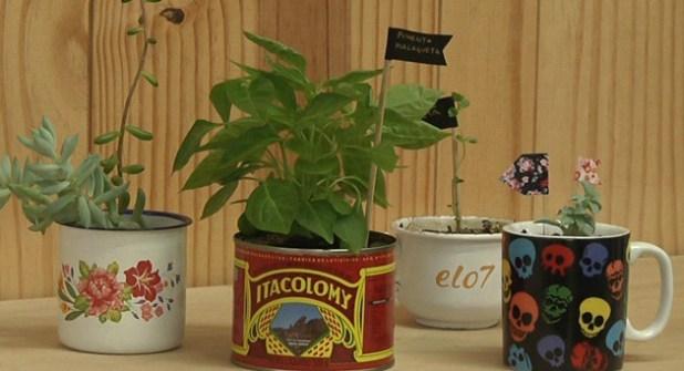 Horta na lata com plaquinha