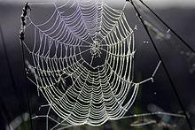 220px-Spinnennetz_im_Gegenlicht