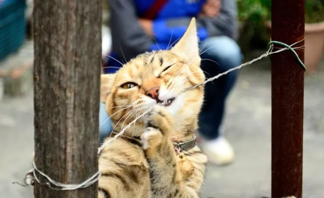 cat playing with a fence (source: pixabay.com)