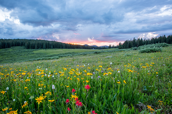 10 facts about the wildflower and other plants