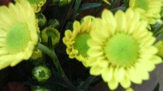 小さき花の魔法