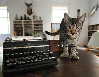 hemingwaycat1