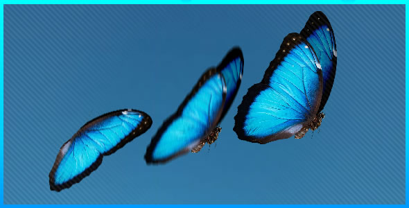 Realistic Butterfly with depth and blur effect