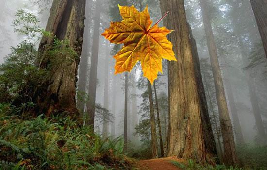 Leaf Transform