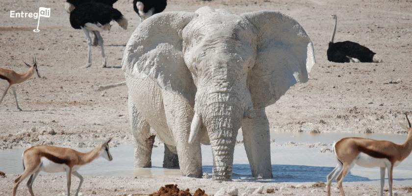 Alugar armários inteligentes, pode evitar um elefante branco em seu condomínio