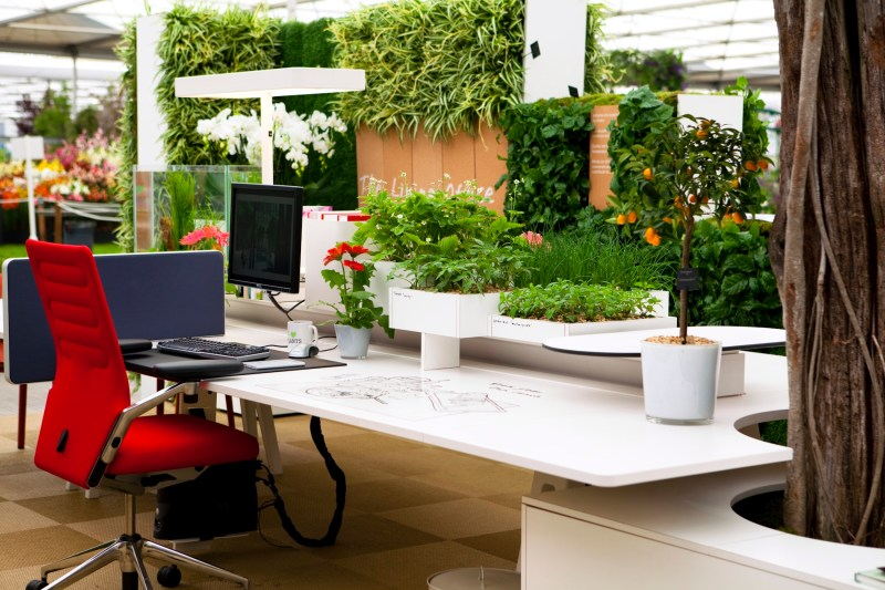 Office plants - eOffice