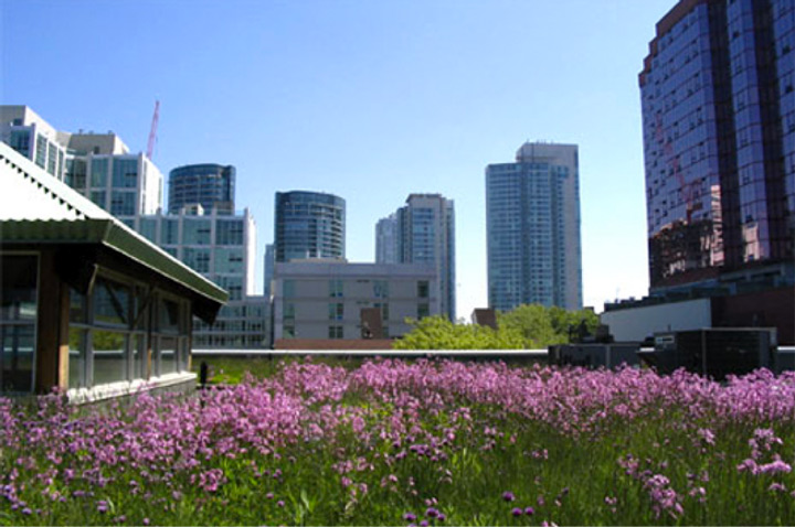 Photo-Green-Roofs-Toronto