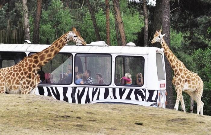 Safaripark Beekse Bergen - Eurocamp