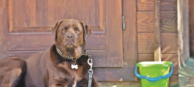 De 5 best gewaardeerde campings voor een vakantie met hond! Mét #dogvlog.
