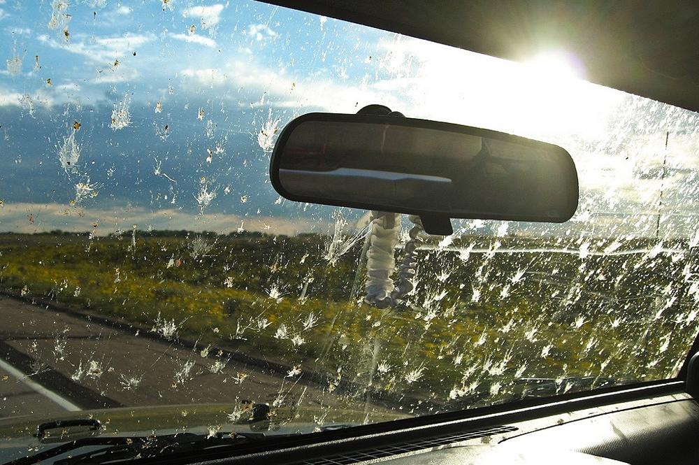 Insectos en el parabrisas del coche