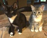 The Ladies of September: Sherri C.'s home in Orlando backs up to a sub-division where people dump cats and kittens. Here are Loki and Freya, two kittens they saved. What can she say? Sherri just can't stand to see homeless animals.