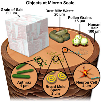 micron scale image by FSU
