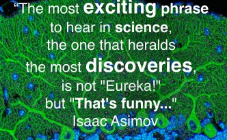 Great Quotes by EyeWire. Asimov, the most exciting phrase to hear in science, science, exciting, discovery, discoveries, that's funny, Isaac Asimov