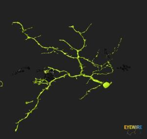 eyewire naming neuron