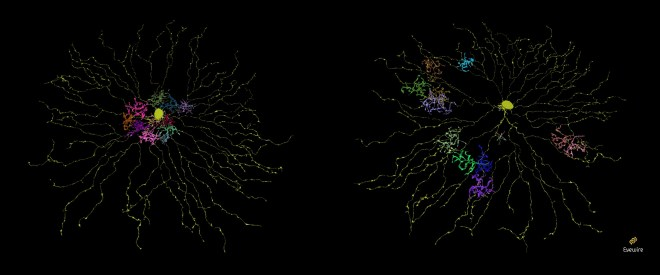 bipolar cell type visualization, neurons, citizen science, eyewire,