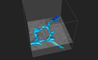 the cube, eyewire, cube, neuron, dendrite, citizen science
