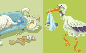 geese, stork, eyewire, citizen science
