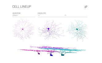 Cells, neurons, museum, eyewire, citizen science, neo, museum, ganglion cells, starburst cell, infographic