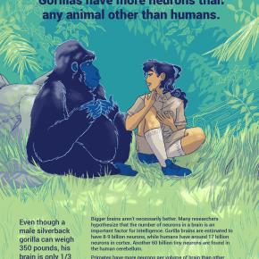 zoo, animals, gorilla, fun, competition, science
