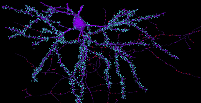 gray matter, white matter, cortex, axons, chandelier cell, diagram, infographic, brain, neuroscience, cortex, cerebral cortex, microns, iarpa, MRI, schematic, Amy Sterling
