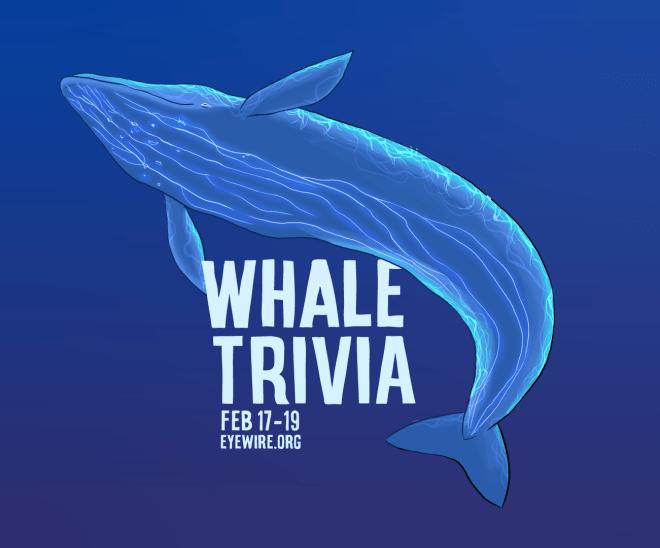 Eyewire, citizen science, marine biology, Undersea Odyssey, whale