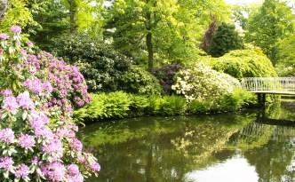 Garden of Eyewire, pond, botany, flowers, Eyewire, citizen science