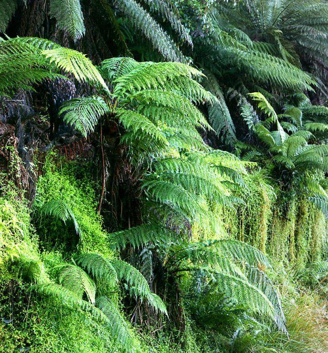 ferns, Eyewire, citizen science, public domain, greenery