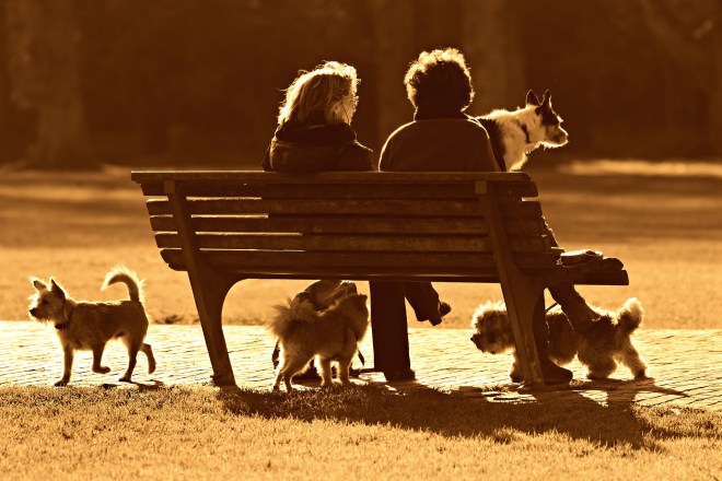 dogs, toys, terriers, bench