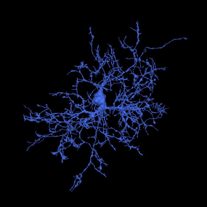 microglia, iarpa microns, MICrONS, machine intelligence cortical networks, AI, artificial intelligence, connectome, connectomics
