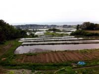白瀑の田んぼ