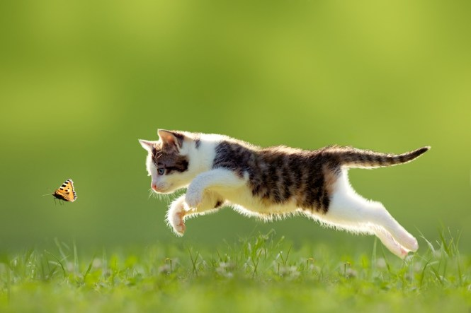 fotografii cu pisici