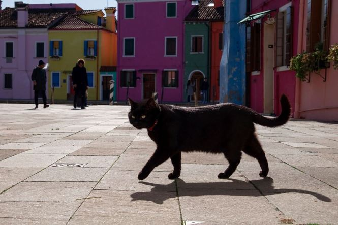 foto pisici