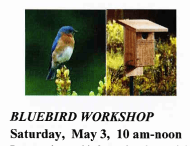 blue bird workshop