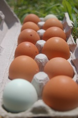 Bear Hill Farm eggs