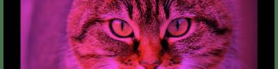 Modificare le immagini: tint(), filter()