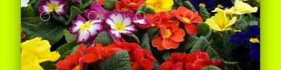Una palette di colori da un'immagine