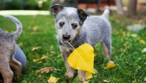 Puppy With Leaf