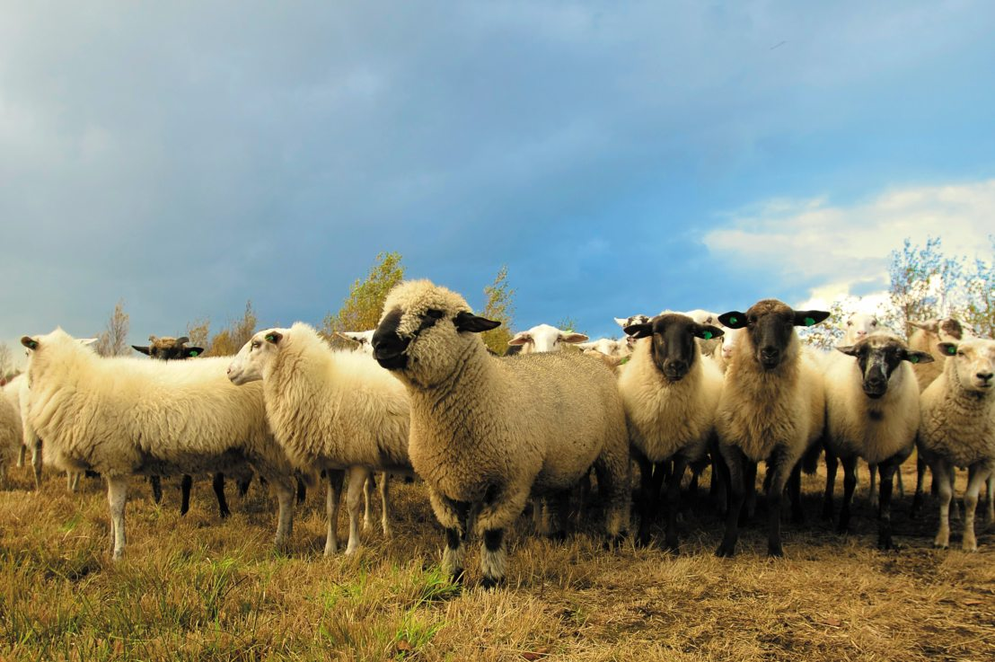 Managing livestock with fieldmargin