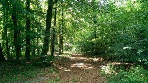 durch diesen Wald soll die Trasse laufen...
