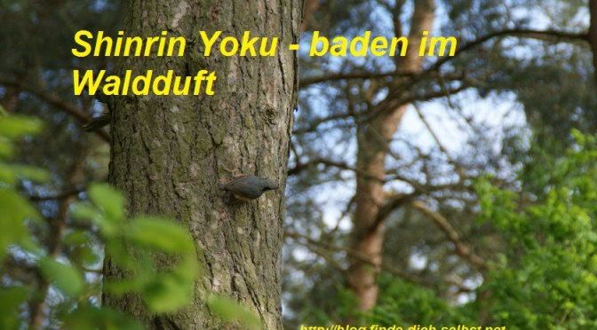 Shinrin Yoku Baden im Waldduft