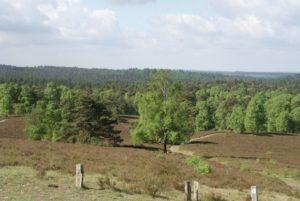 Wilseder Heide